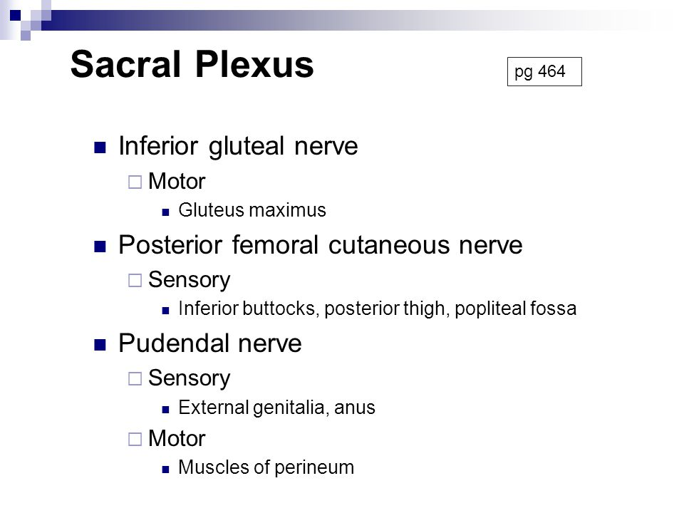 Sacral Plexus Inferior gluteal nerve Posterior femoral cutaneous nerve