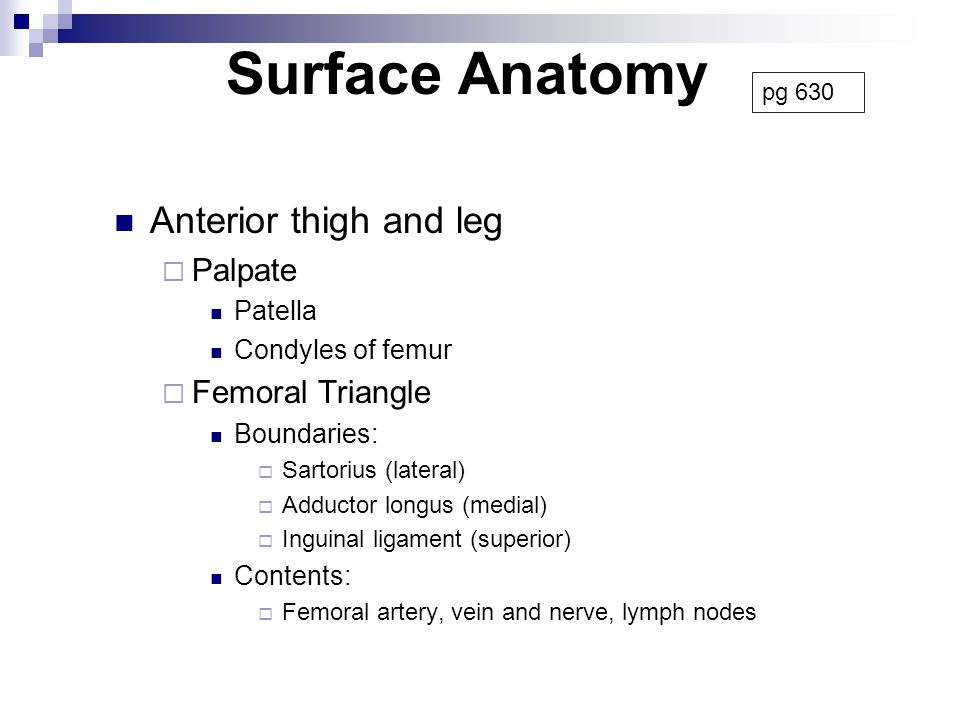 Surface Anatomy Anterior thigh and leg Palpate Femoral Triangle