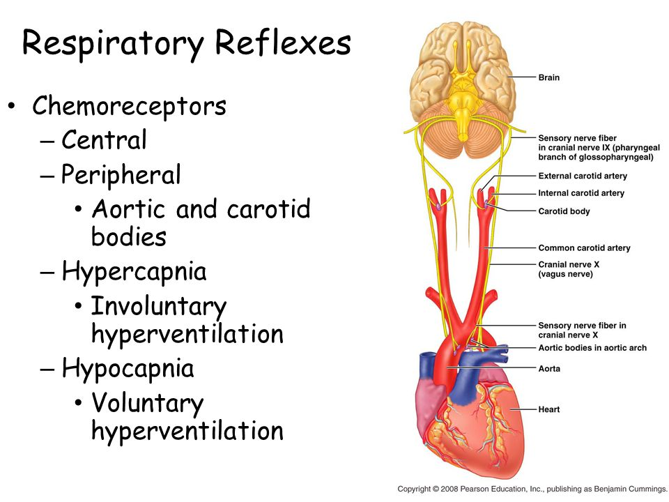 Respiratory Reflexes Chemoreceptors Central Peripheral
