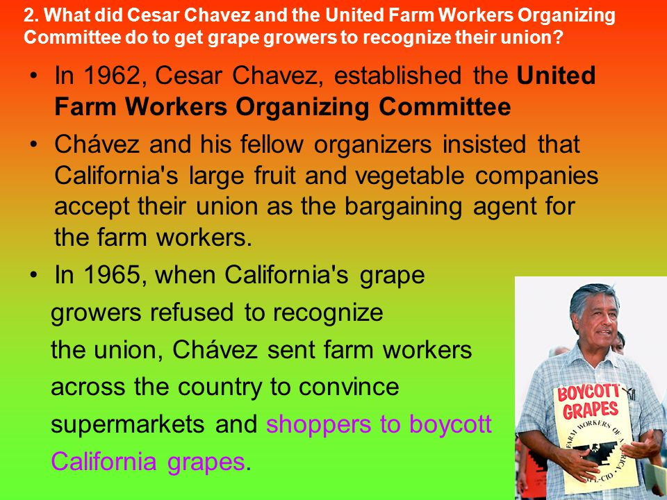 In 1965, when California s grape growers refused to recognize