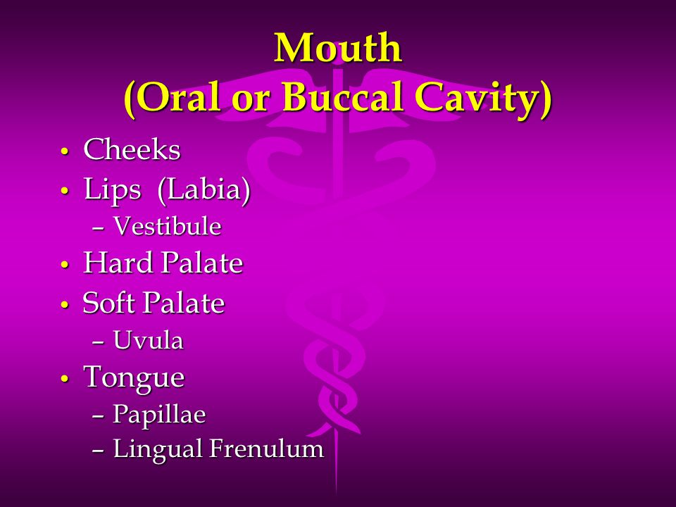 Mouth (Oral or Buccal Cavity)