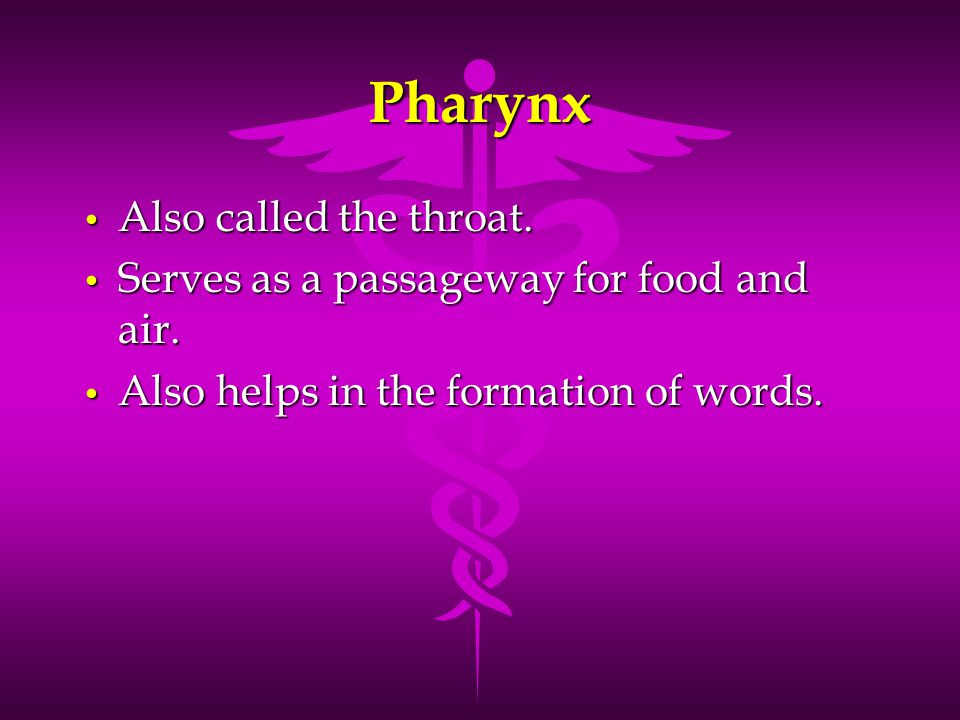 Pharynx Also called the throat.