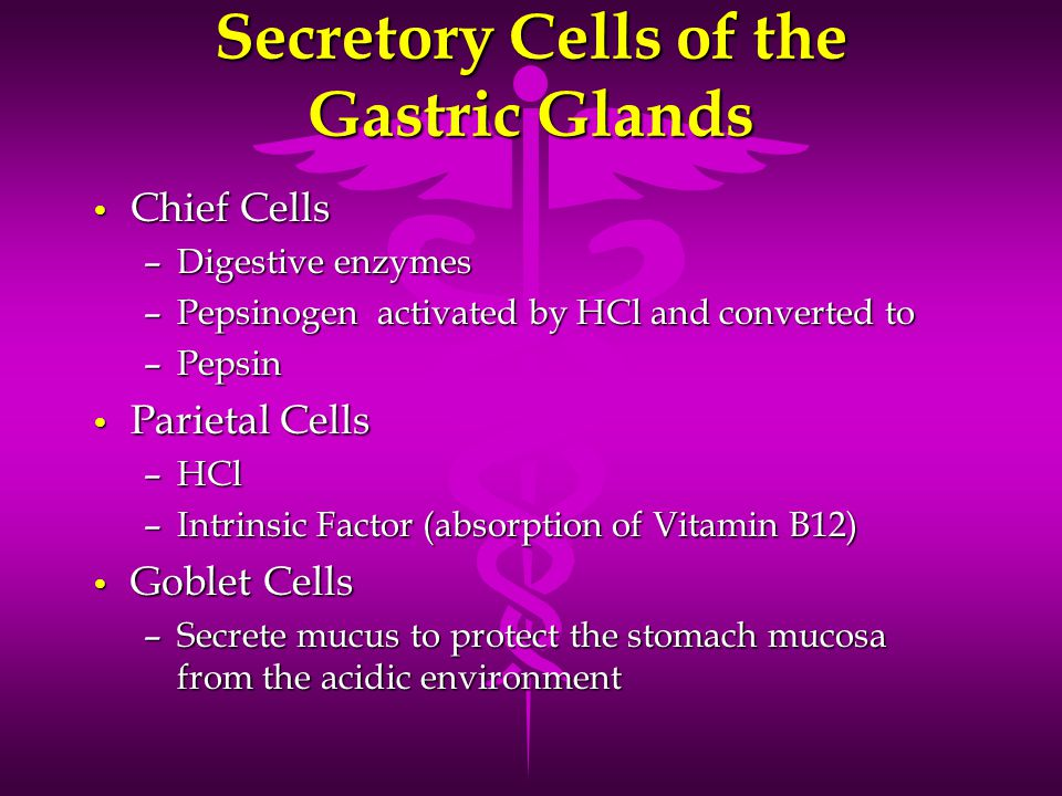 Secretory Cells of the Gastric Glands