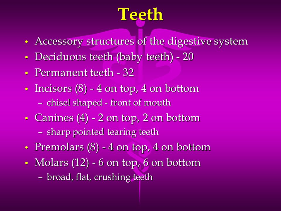 Teeth Accessory structures of the digestive system