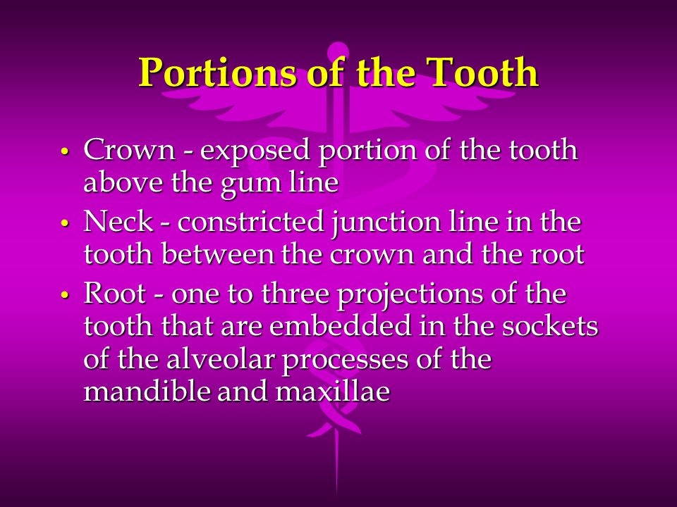 Portions of the Tooth Crown - exposed portion of the tooth above the gum line.