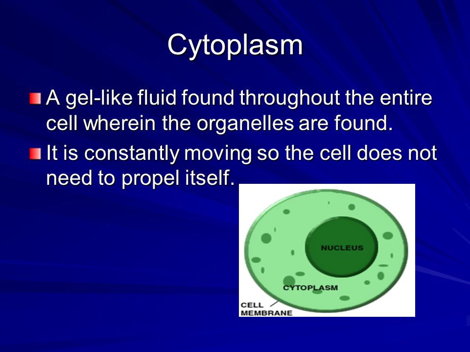 Cytoplasm A gel-like fluid found throughout the entire cell wherein the organelles are found.