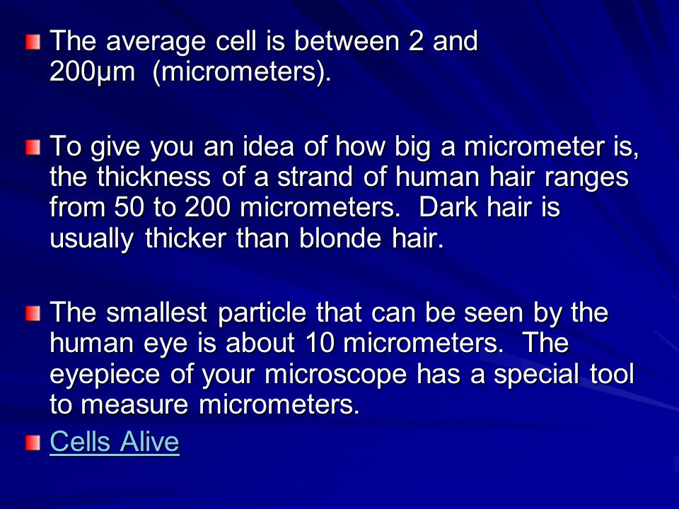 The average cell is between 2 and 200µm (micrometers).