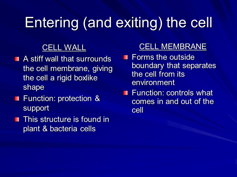 Entering (and exiting) the cell