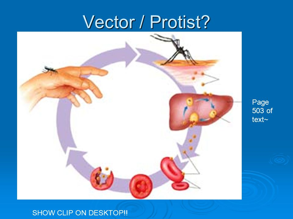 Vector / Protist Page 503 of text~ SHOW CLIP ON DESKTOP!!