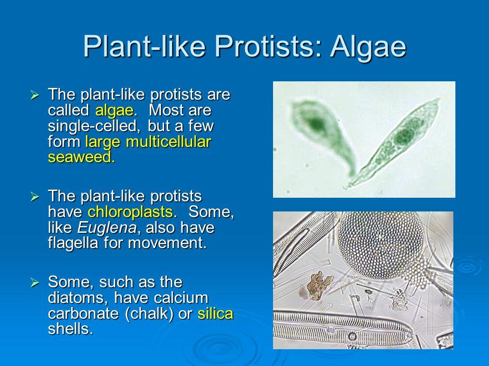Plant-like Protists: Algae