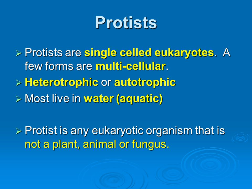 Protists Protists are single celled eukaryotes. A few forms are multi-cellular. Heterotrophic or autotrophic.