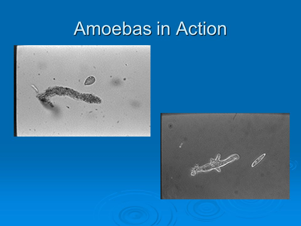 Amoebas in Action