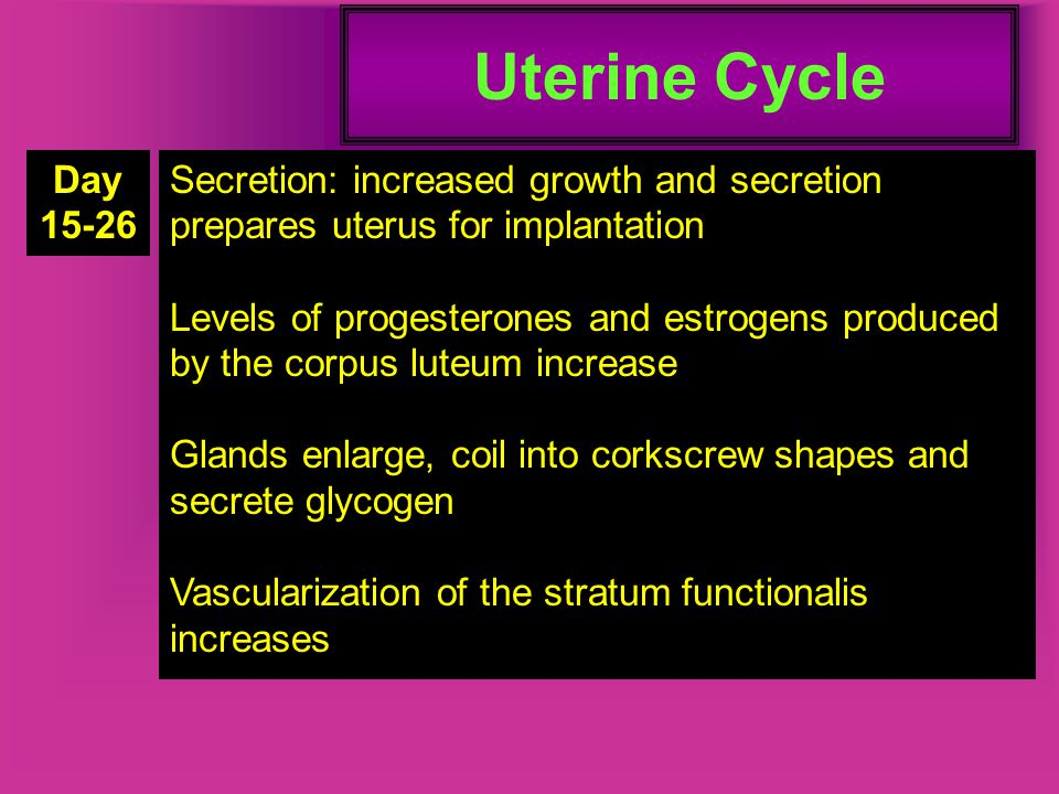 Uterine Cycle Day. 15-26. Secretion: increased growth and secretion prepares uterus for implantation.