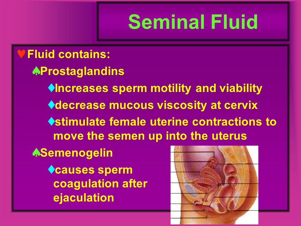 Seminal Fluid Fluid contains: Prostaglandins