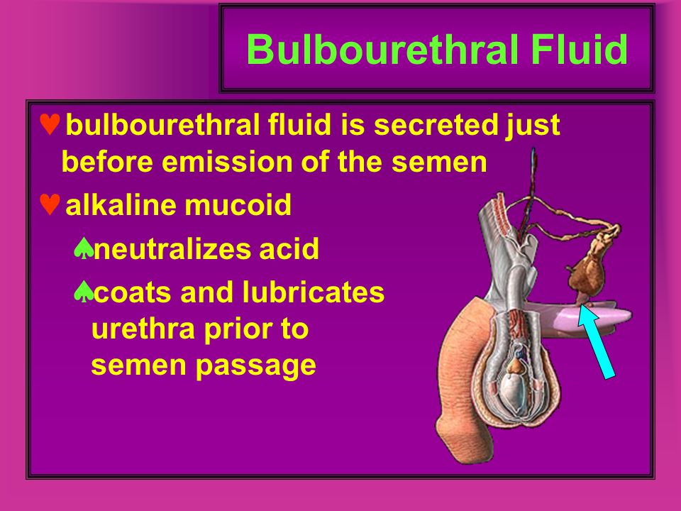 Bulbourethral Fluid bulbourethral fluid is secreted just before emission of the semen. alkaline mucoid.