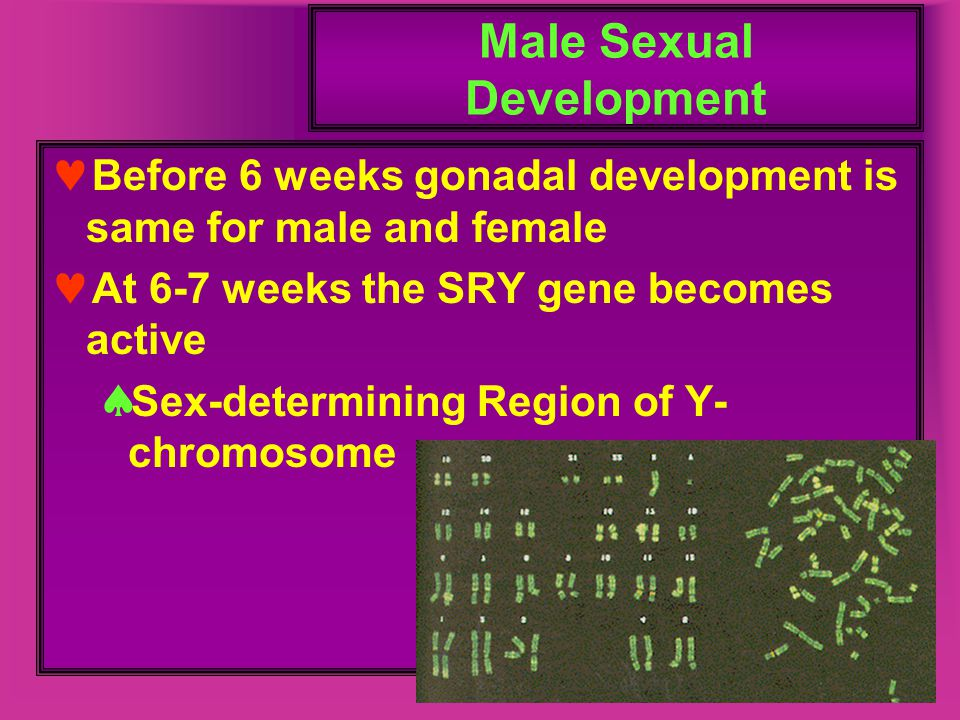 Male Sexual Development