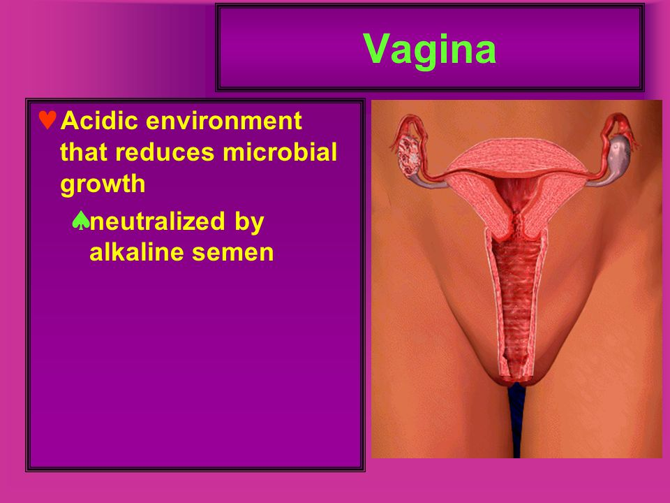 Vagina Acidic environment that reduces microbial growth