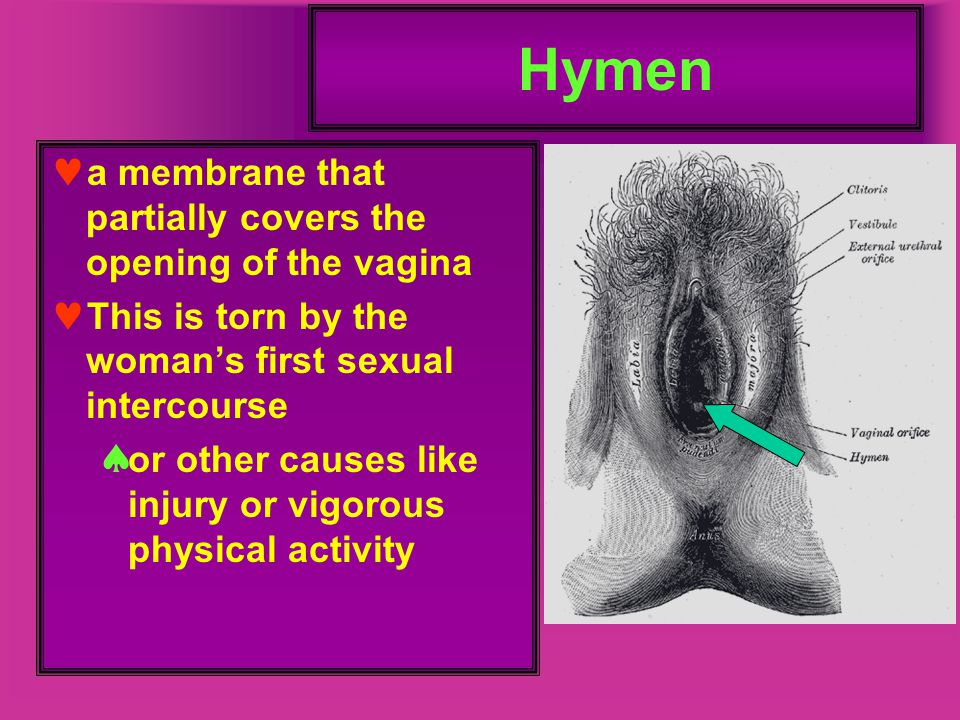 Hymen a membrane that partially covers the opening of the vagina