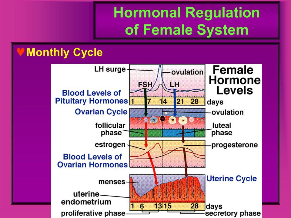 Hormonal Regulation of Female System