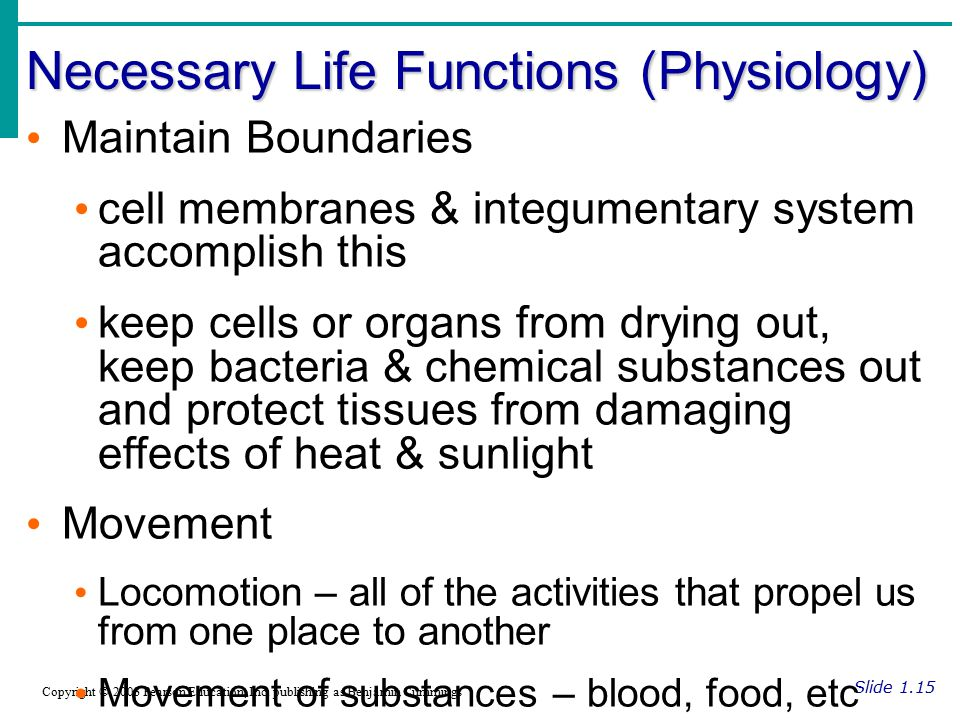 Necessary Life Functions (Physiology)