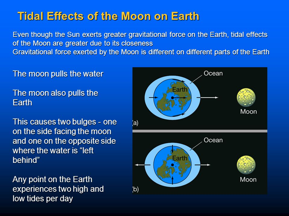 Tidal Effects of the Moon on Earth