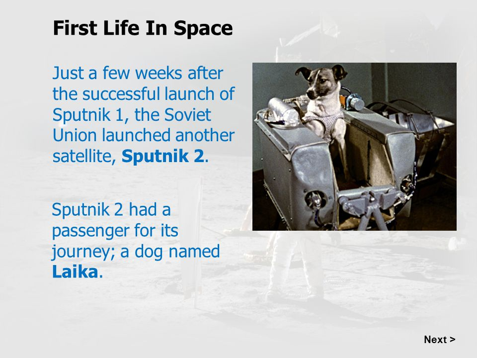 First Life In Space Just a few weeks after the successful launch of Sputnik 1, the Soviet Union launched another satellite, Sputnik 2.