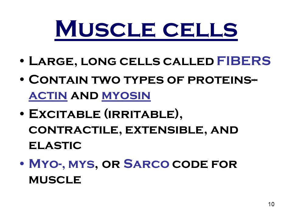 Muscle cells Large, long cells called FIBERS