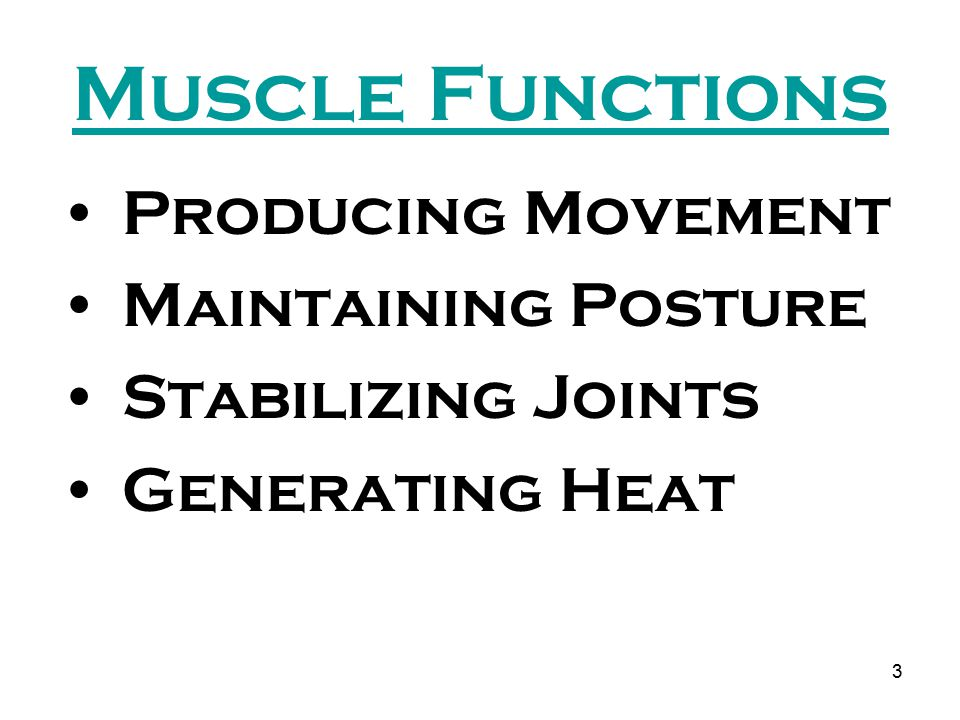 Muscle Functions Producing Movement Maintaining Posture