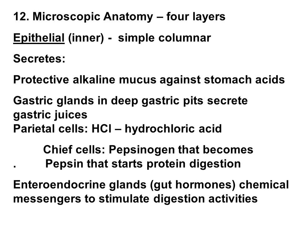 12. Microscopic Anatomy – four layers