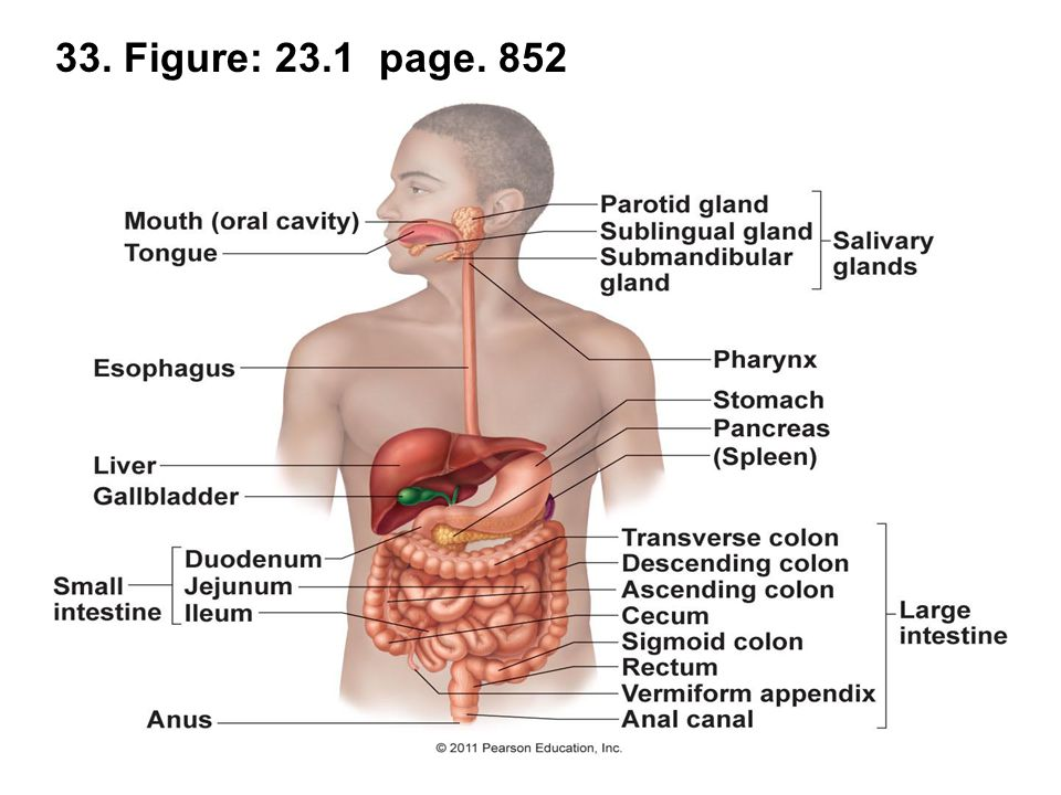 33. Figure: 23.1 page. 852