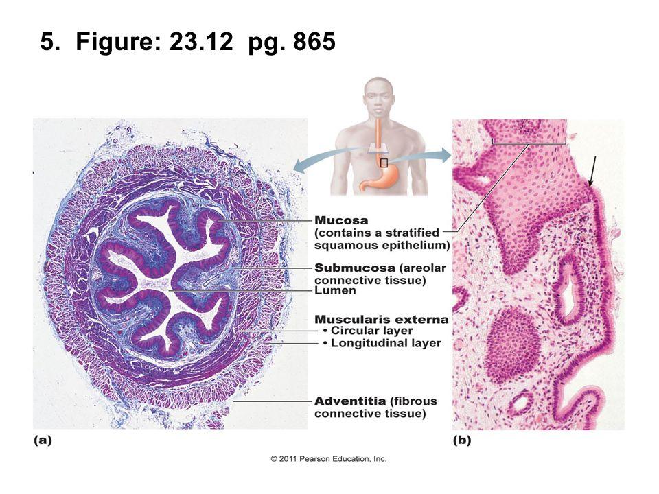 5. Figure: 23.12 pg. 865