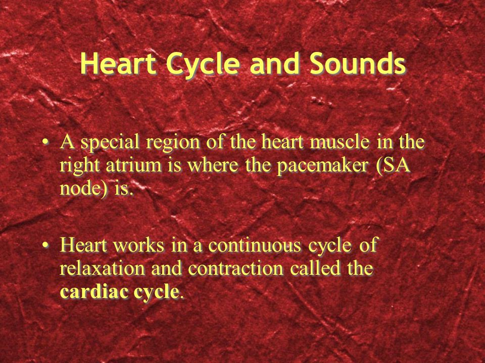 Heart Cycle and Sounds A special region of the heart muscle in the right atrium is where the pacemaker (SA node) is.