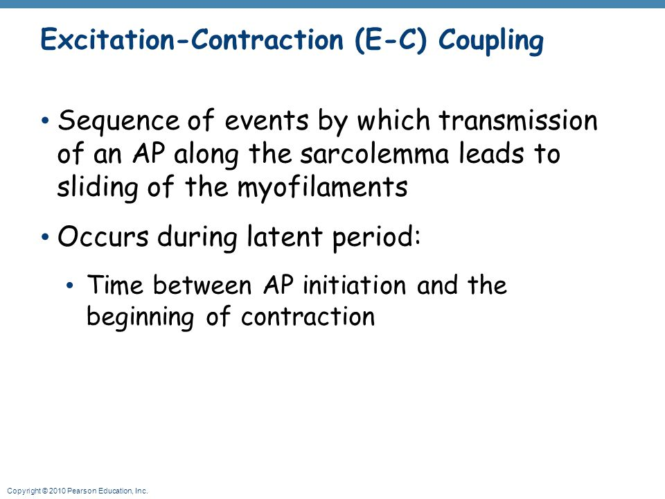Excitation-Contraction (E-C) Coupling