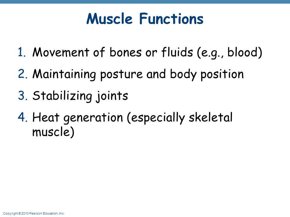 Muscle Functions Movement of bones or fluids (e.g., blood)