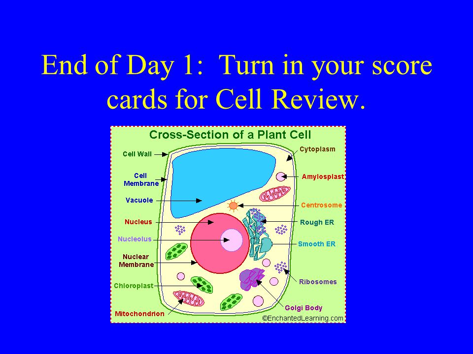 End of Day 1: Turn in your score cards for Cell Review.