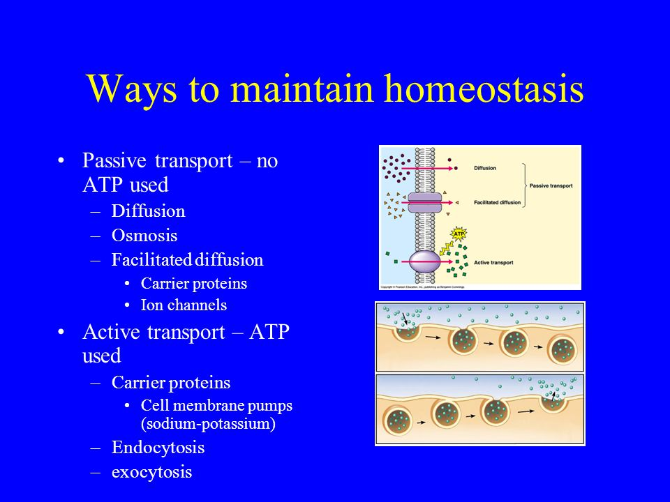 Ways to maintain homeostasis