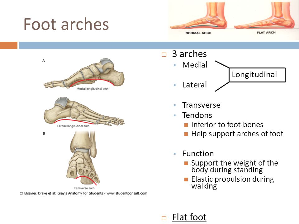 Foot arches 3 arches Flat foot Medial Longitudinal Lateral Transverse