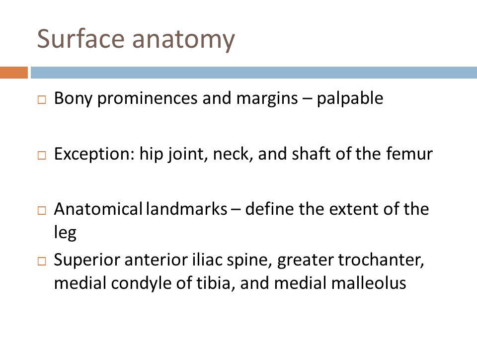 Surface anatomy Bony prominences and margins – palpable