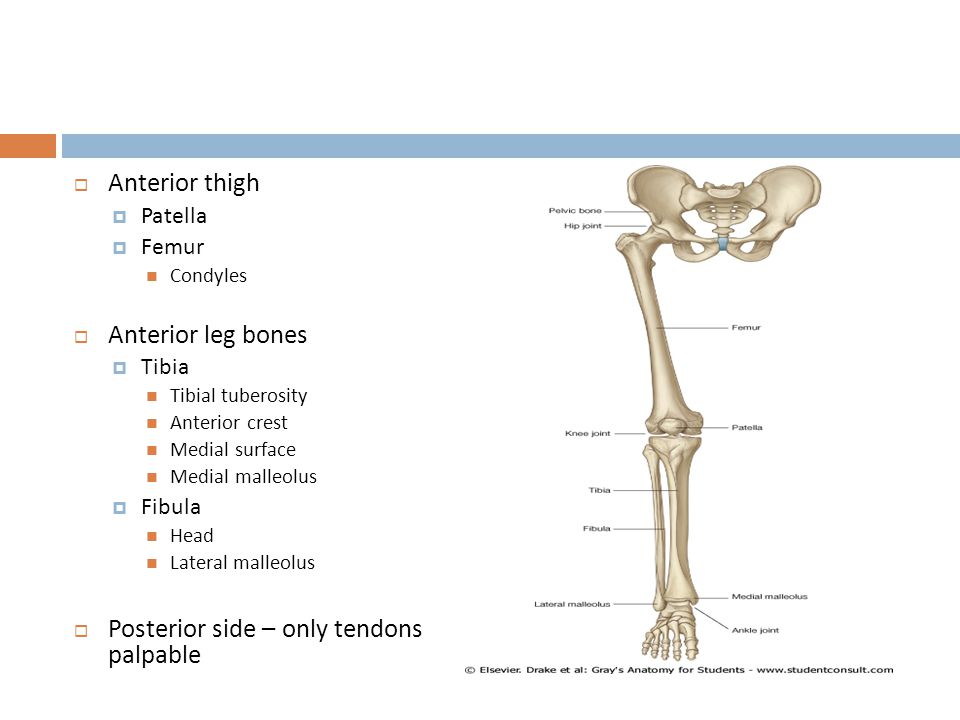 Posterior side – only tendons palpable