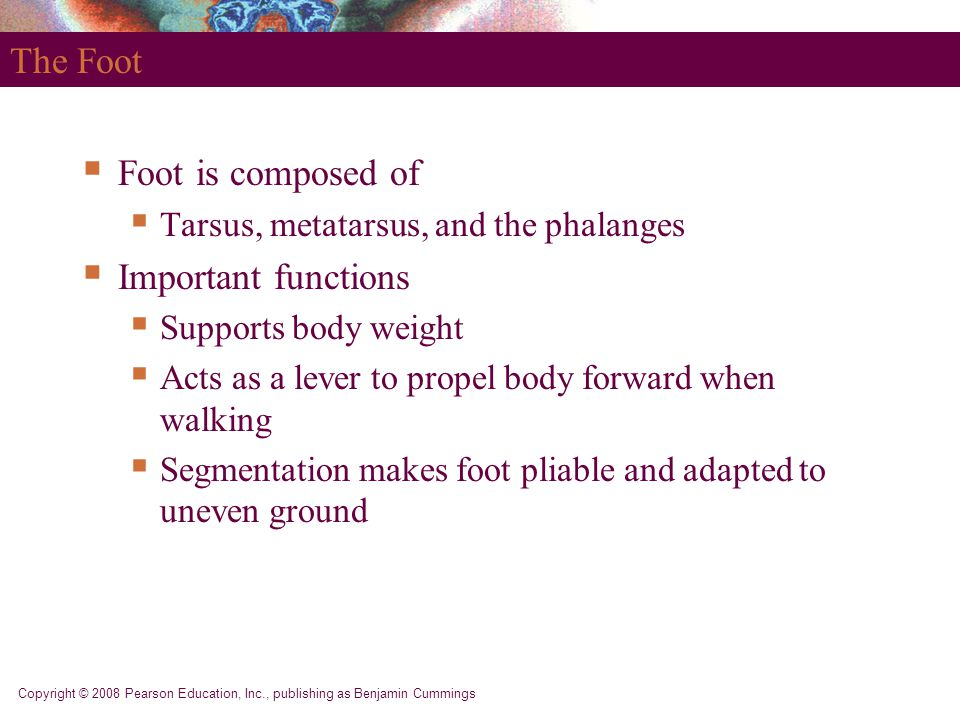 The Foot Foot is composed of Important functions
