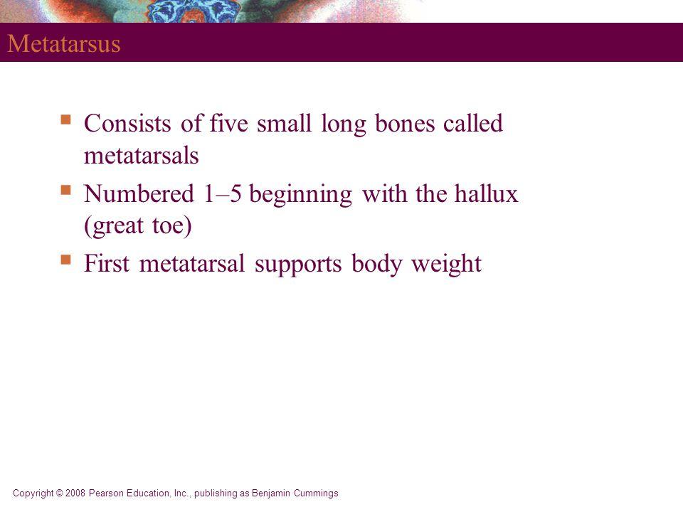 Consists of five small long bones called metatarsals