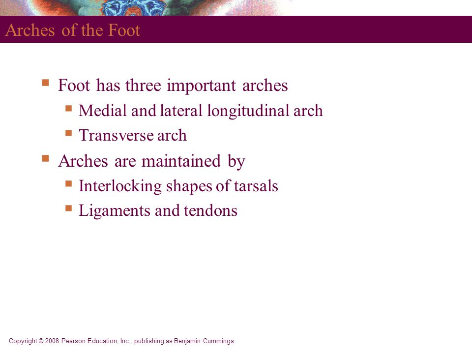 Foot has three important arches