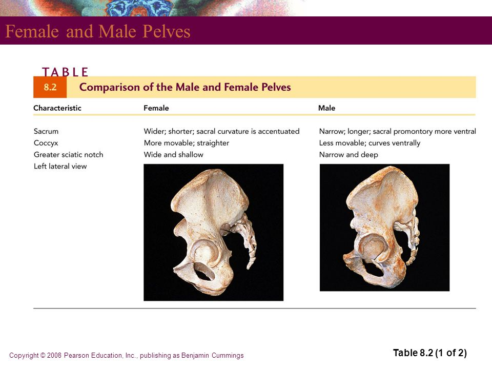 Female and Male Pelves Table 8.2 (1 of 2)