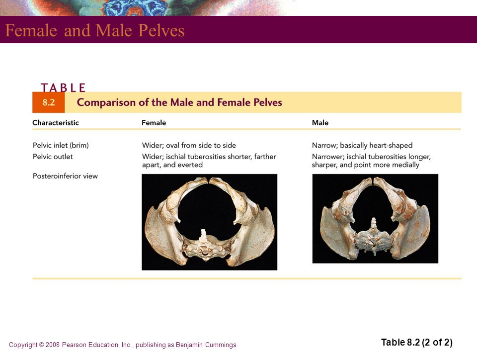 Female and Male Pelves Table 8.2 (2 of 2)