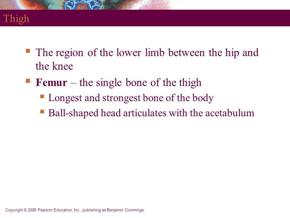The region of the lower limb between the hip and the knee