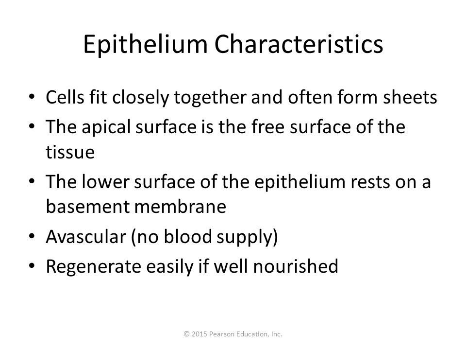 Epithelium Characteristics