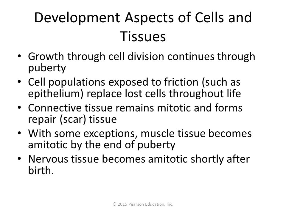 Development Aspects of Cells and Tissues