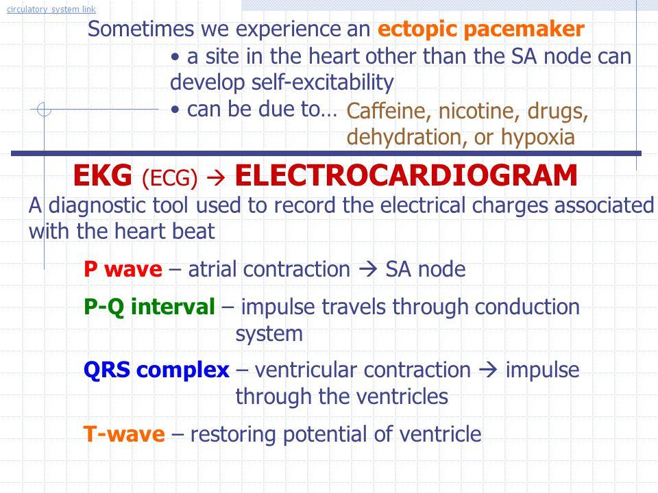 EKG (ECG)  ELECTROCARDIOGRAM