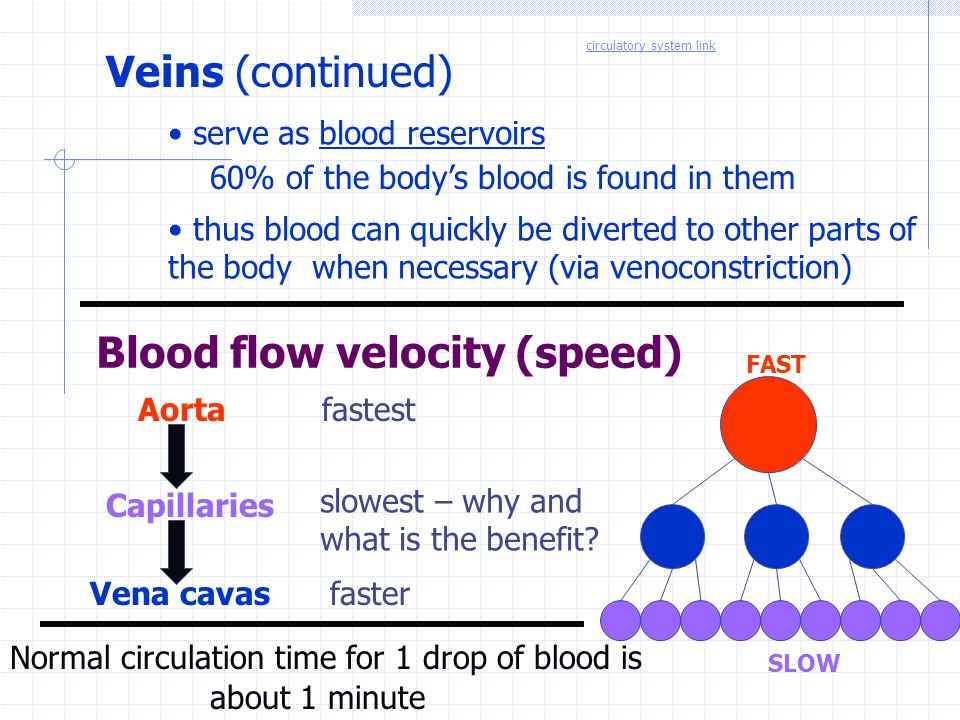 Blood flow velocity (speed)