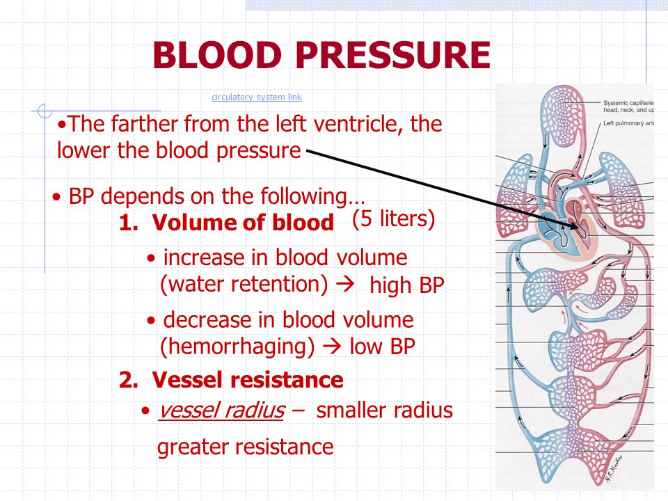 BLOOD PRESSURE The farther from the left ventricle, the